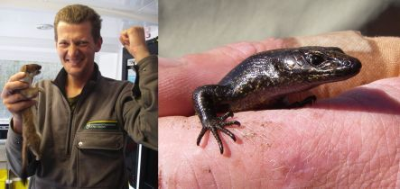 Pete McMurtrie with a dead stoat, and a Fiordland skink