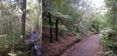 Brent Beaven on Ulva Island, which boasts dry gravel paths and a regenration understorey, including many lancewoods (images: A. Ballance)