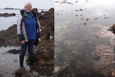 Wendy Nelson and seaweeds at low tide