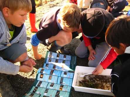 A Gift of Green September Pupils having an outdoor water ecology lesson small