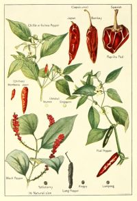 Spices Chilis