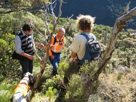 Volunteers searching for the Great Spotted Kiwi near Arthur's Pass.