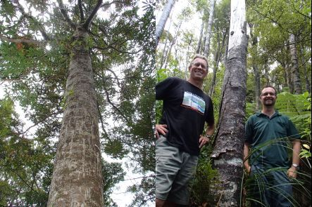 A healthy kauri tree, and Bruce Burns and George Perry next to a dead kauri tree in the Waitakere Ranges