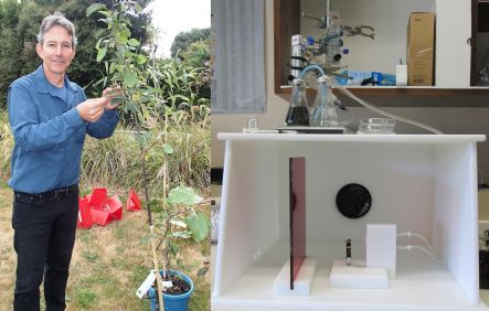 The training set-up for sniffer bees, and Max Suckling with a seedling apple tree