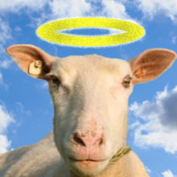 Photo for Sheep Heaven